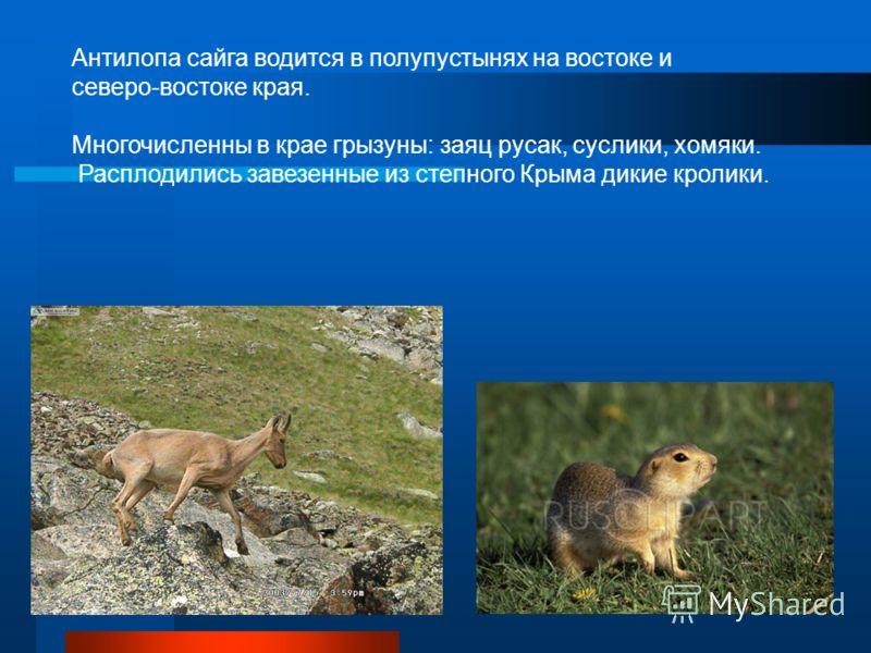 Антилопа сайга водится в полупустынях на востоке и северо-востоке края. Многочисленны в крае грызуны: заяц русак, суслики, хомяки. Расплодились завезенные из степного Крыма дикие кролики.