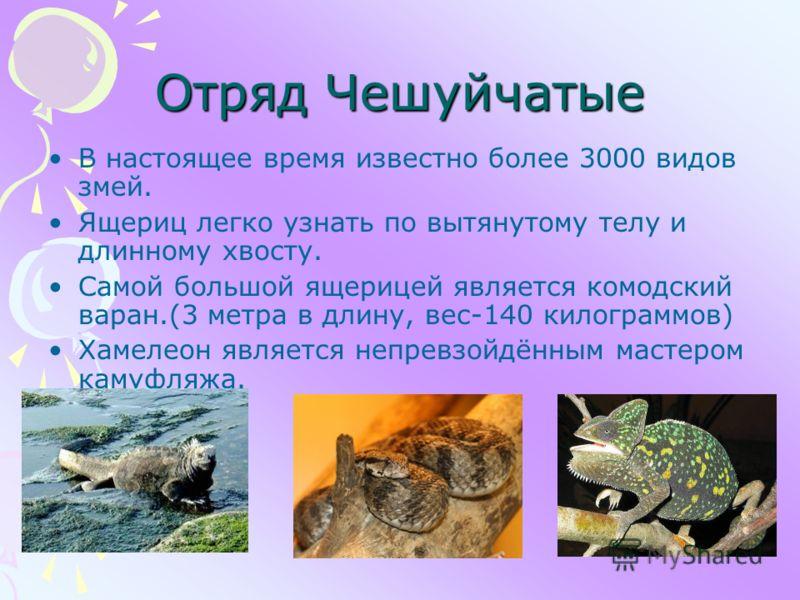 Отряд Чешуйчатые В настоящее время известно более 3000 видов змей. Ящериц легко узнать по вытянутому телу и длинному хвосту. Самой большой ящерицей является комодский варан.(3 метра в длину, вес-140 килограммов) Хамелеон является непревзойдённым маст