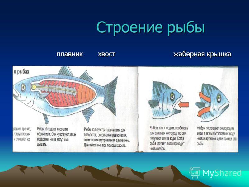 Строение рыбы Строение рыбы плавник хвост жаберная крышка плавник хвост жаберная крышка