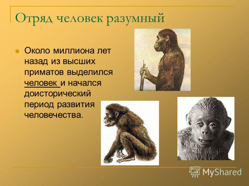 Отряд человек разумный Около миллиона лет назад из высших приматов выделился человек и начался доисторический период развития человечества.