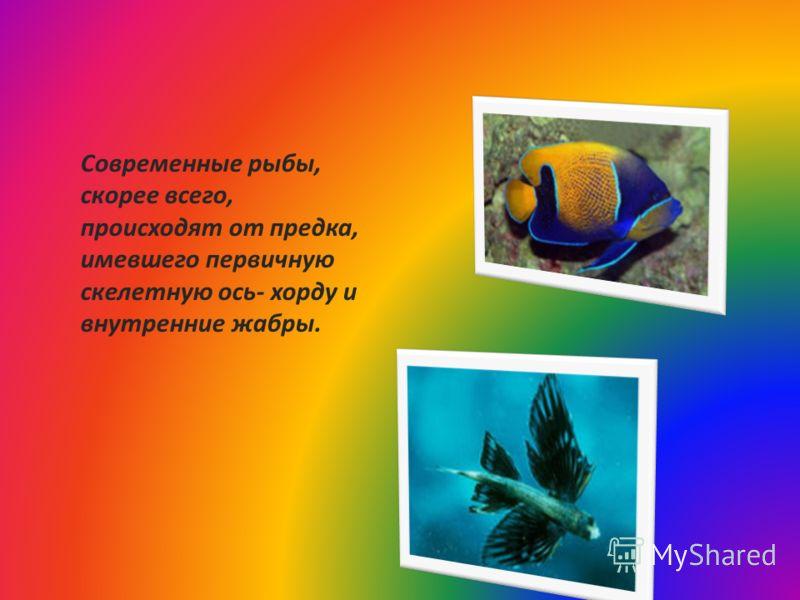 Современные рыбы, скорее всего, происходят от предка, имевшего первичную скелетную ось- хорду и внутренние жабры.