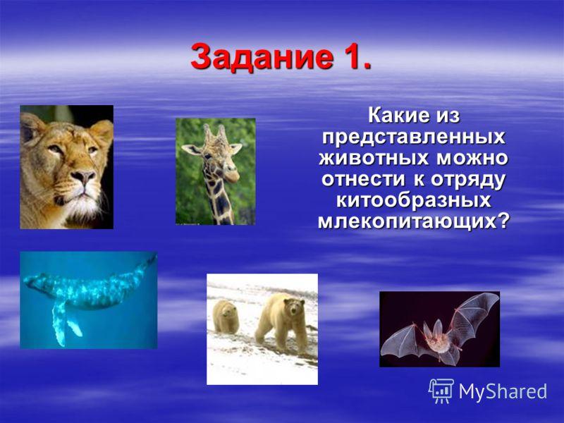 Задание 1. Какие из представленных животных можно отнести к отряду китообразных млекопитающих?