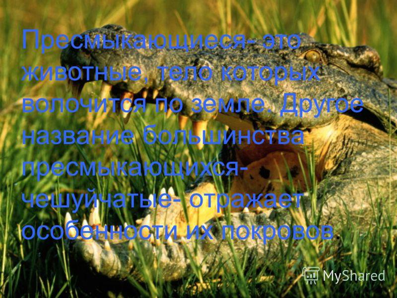 Пресмыкающиеся- это животные, тело которых волочится по земле. Другое название большинства пресмыкающихся- чешуйчатые- отражает особенности их покровов.