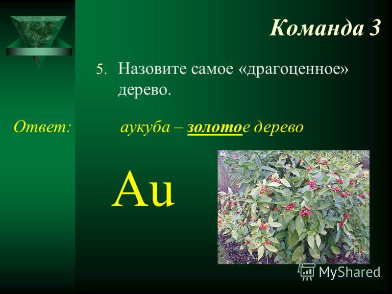 Команда 3 5. Назовите самое «драгоценное» дерево. Ответ: Au аукуба – золотое дерево