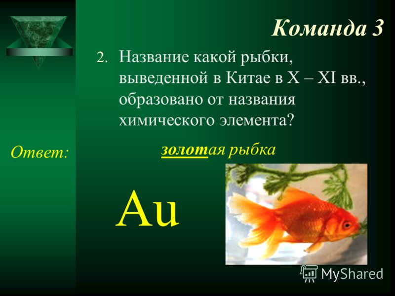 Команда 3 2. Название какой рыбки, выведенной в Китае в X – XI вв., образовано от названия химического элемента? Ответ: золотая рыбка Au