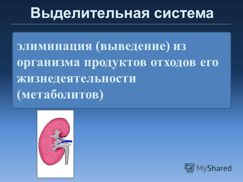 Выделительная система элиминация (выведение) из организма продуктов отходов его жизнедеятельности (метаболитов)