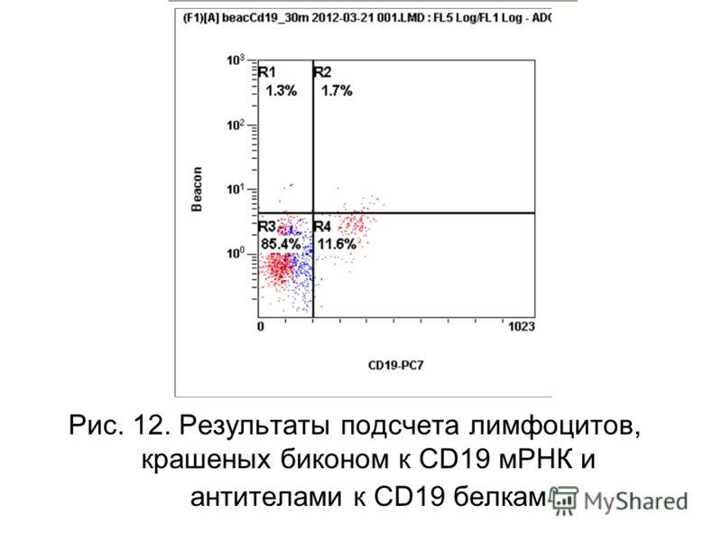 Рис. 12. Результаты подсчета лимфоцитов, крашеных биконом к CD19 мРНК и антителами к СD19 белкам