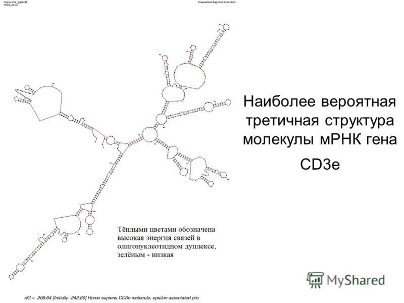 Наиболее вероятная третичная структура молекулы мРНК гена CD3e