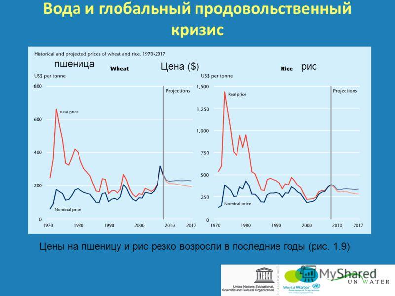 Вода и глобальный продовольственный кризис Цены на пшеницу и рис резко возросли в последние годы (рис. 1.9) рис пшеница Цена ($)