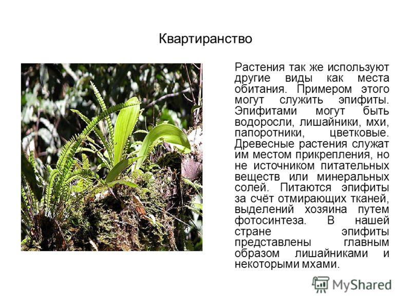 Квартиранство Растения так же используют другие виды как места обитания. Примером этого могут служить эпифиты. Эпифитами могут быть водоросли, лишайники, мхи, папоротники, цветковые. Древесные растения служат им местом прикрепления, но не источником
