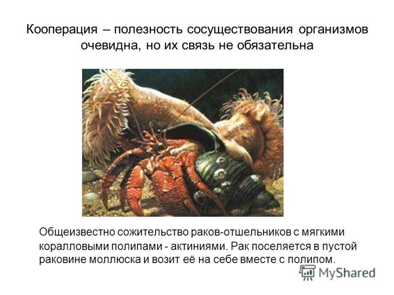 Кооперация – полезность сосуществования организмов очевидна, но их связь не обязательна Общеизвестно сожительство раков-отшельников с мягкими коралловыми полипами - актиниями. Рак поселяется в пустой раковине моллюска и возит её на себе вместе с поли