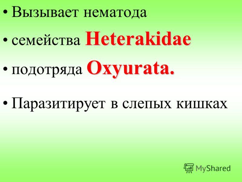 Вызывает нематода Heterakidaeсемейства Heterakidae Oxyurata.подотряда Oxyurata. Паразитирует в слепых кишках