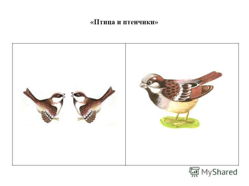 «Птица и птенчики»