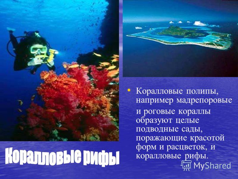 Коралловые полипы, например мадрепоровые и роговые кораллы образуют целые подводные сады, поражающие красотой форм и расцветок, и коралловые рифы.