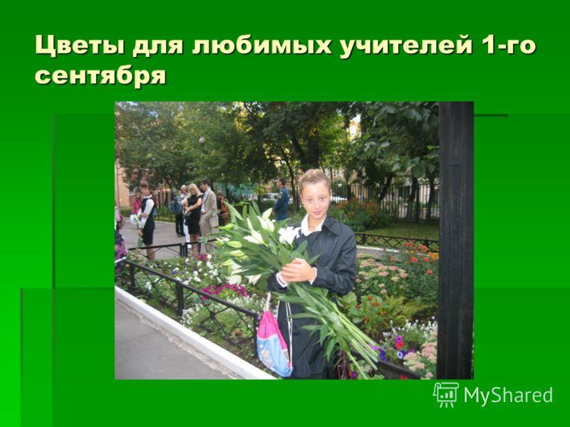 Цветы для любимых учителей 1-го сентября