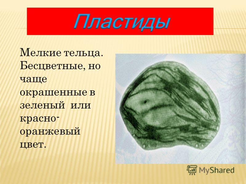 Мелкие тельца. Бесцветные, но чаще окрашенные в зеленый или красно- оранжевый цвет.