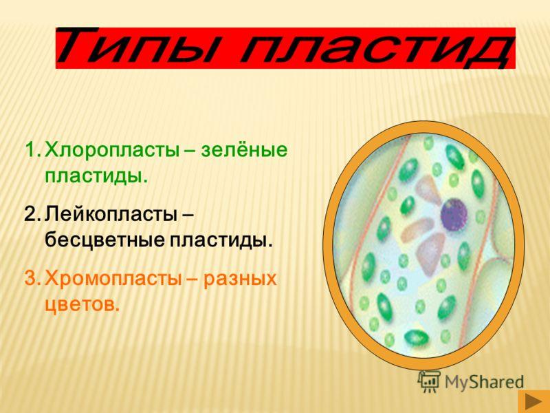 1.Хлоропласты – зелёные пластиды. 2.Лейкопласты – бесцветные пластиды. 3.Хромопласты – разных цветов.
