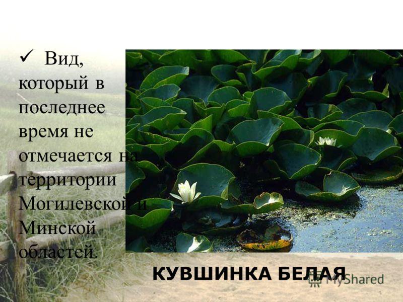 КУВШИНКА БЕЛАЯ Вид, который в последнее время не отмечается на территории Могилевской и Минской областей.