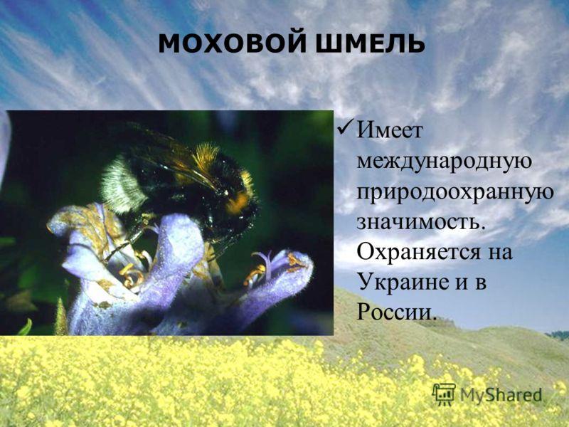 МОХОВОЙ ШМЕЛЬ Имеет международную природоохранную значимость. Охраняется на Украине и в России.