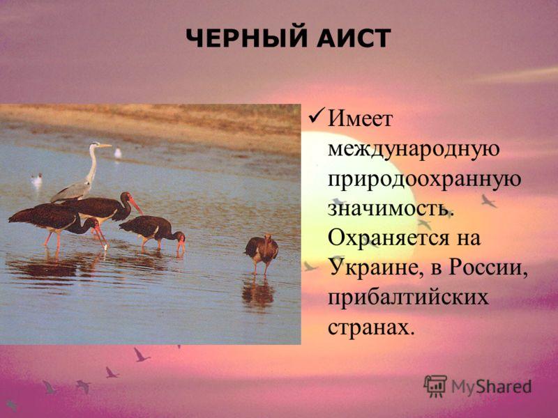 ЧЕРНЫЙ АИСТ Имеет международную природоохранную значимость. Охраняется на Украине, в России, прибалтийских странах.