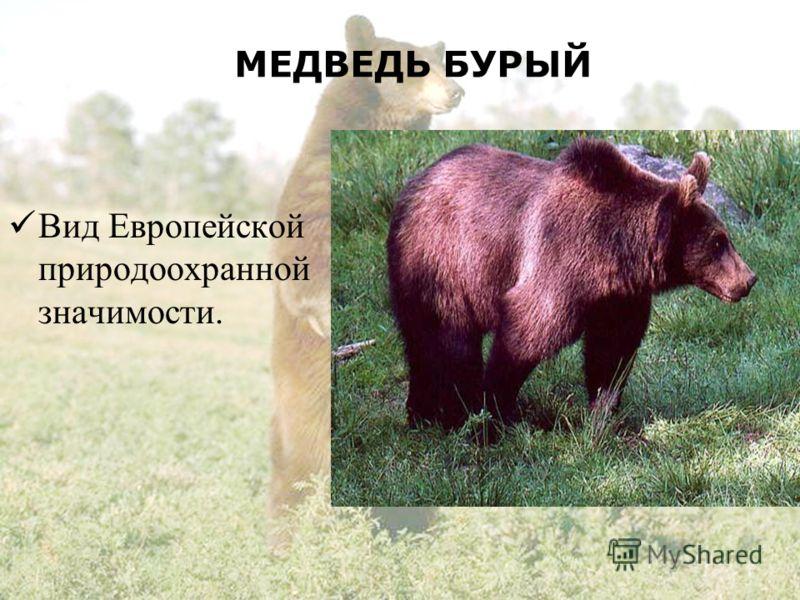 МЕДВЕДЬ БУРЫЙ Вид Европейской природоохранной значимости.
