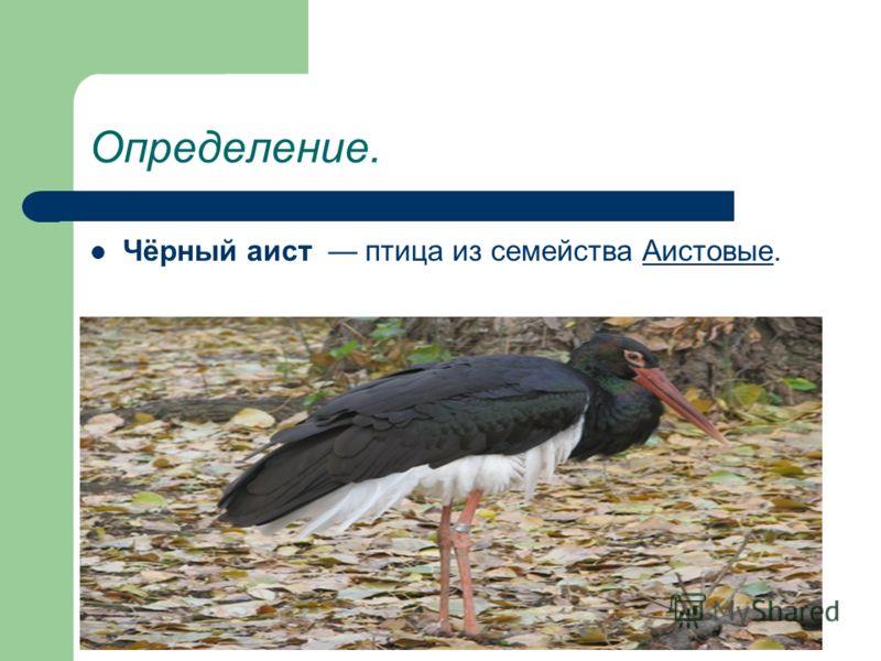 Определение. Чёрный аист птица из семейства Аистовые.Аистовые