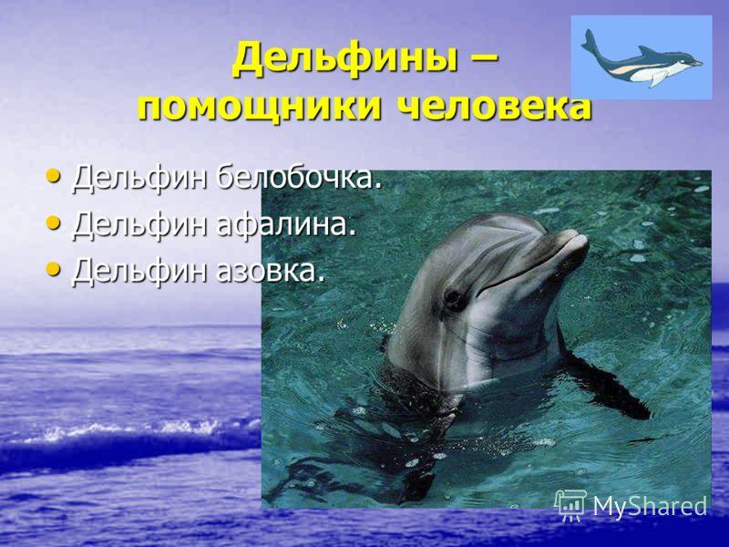 Дельфины – помощники человека Дельфин белобочка. Дельфин белобочка. Дельфин афалина. Дельфин афалина. Дельфин азовка. Дельфин азовка.