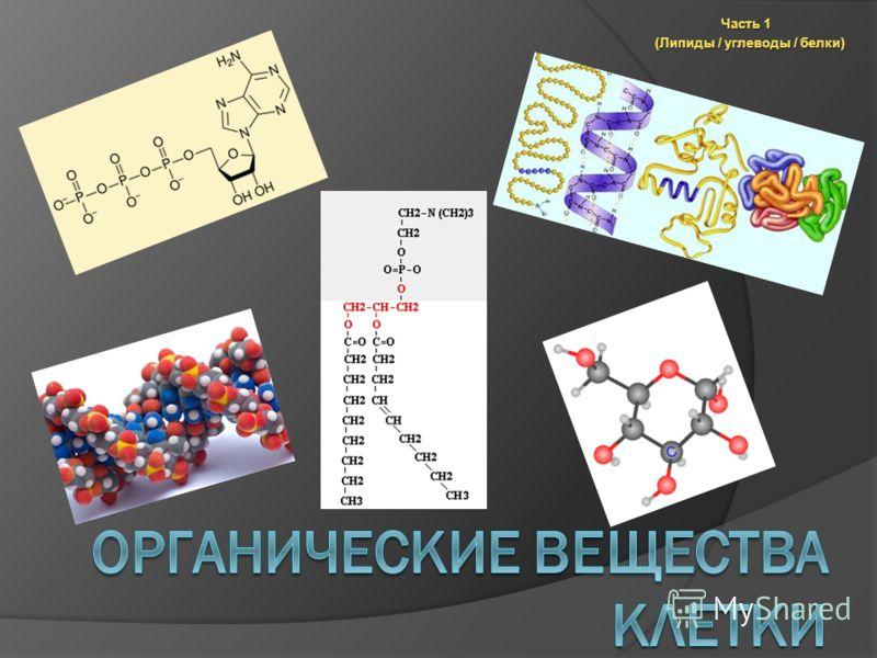 Часть 1 (Липиды / углеводы / белки)