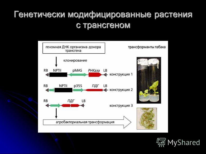 Генетически модифицированные растения с трансгеном