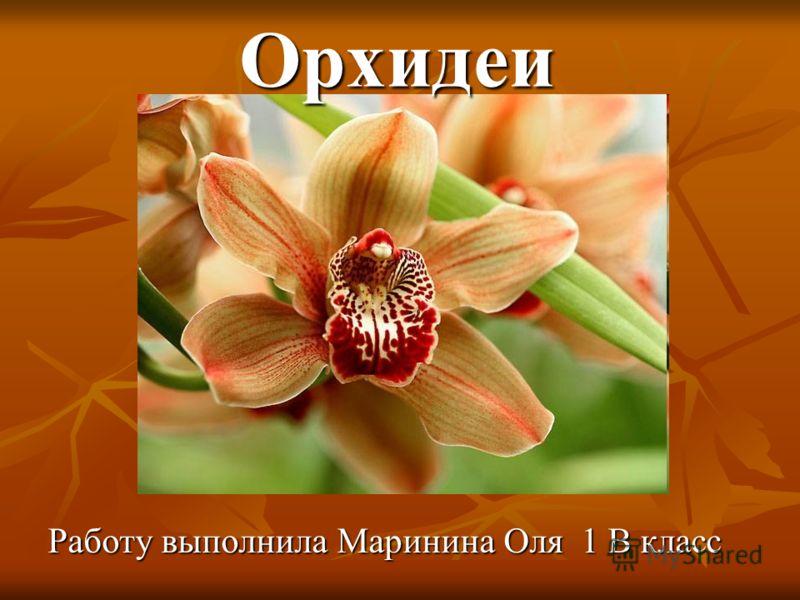 Орхидеи Работу выполнила Маринина Оля 1 В класс