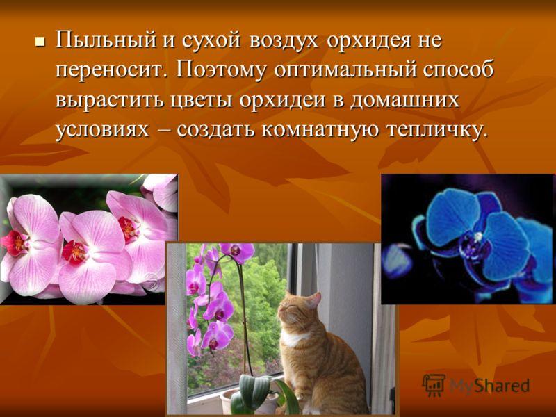 Пыльный и сухой воздух орхидея не переносит. Поэтому оптимальный способ вырастить цветы орхидеи в домашних условиях – создать комнатную тепличку. Пыльный и сухой воздух орхидея не переносит. Поэтому оптимальный способ вырастить цветы орхидеи в домашн
