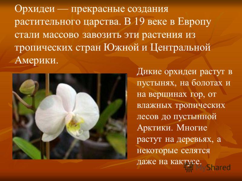 Орхидеи прекрасные создания растительного царства. В 19 веке в Европу стали массово завозить эти растения из тропических стран Южной и Центральной Америки. Дикие орхидеи растут в пустынях, на болотах и на вершинах гор, от влажных тропических лесов до
