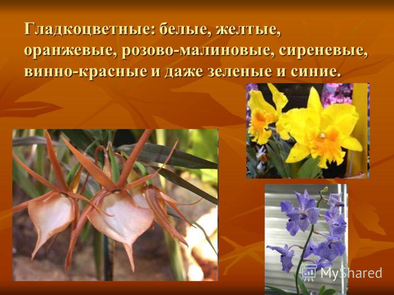 Гладкоцветные: белые, желтые, оранжевые, розово-малиновые, сиреневые, винно-красные и даже зеленые и синие.