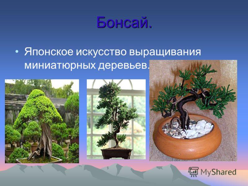 Бонсай. Японское искусство выращивания миниатюрных деревьев.