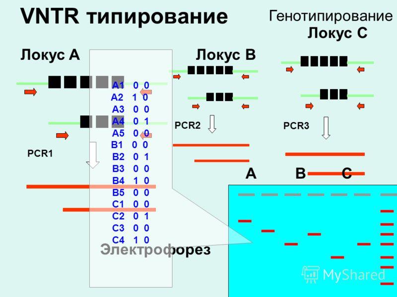 VNTR типирование PCR1 Локус A PCR2 Локус B PCR3 Локус C ABC Электрофорез A1 0 0 A2 1 0 A3 0 0 A4 0 1 A5 0 0 B1 0 0 B2 0 1 B3 0 0 B4 1 0 B5 0 0 C1 0 0 C2 0 1 C3 0 0 C4 1 0 Генотипирование