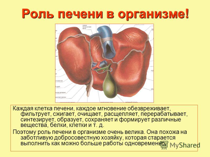 Роль печени в организме! Каждая клетка печени, каждое мгновение обезвреживает, фильтрует, сжигает, очищает, расщепляет, перерабатывает, синтезирует, образует, сохраняет и формирует различные вещества, белки, клетки и т. д. Поэтому роль печени в орган