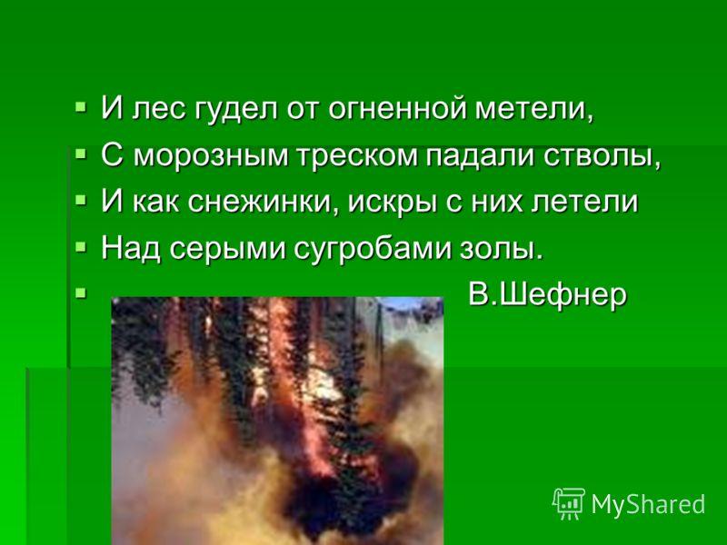 И лес гудел от огненной метели, И лес гудел от огненной метели, С морозным треском падали стволы, С морозным треском падали стволы, И как снежинки, искры с них летели И как снежинки, искры с них летели Над серыми сугробами золы. Над серыми сугробами