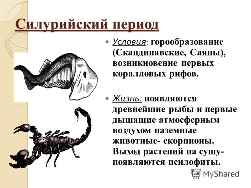 Силурийский период Условия : горообразование (Скандинавские, Саяны), возникновение первых коралловых рифов. Жизнь : появляются древнейшие рыбы и первые дышащие атмосферным воздухом наземные животные- скорпионы. Выход растений на сушу- появляются псил