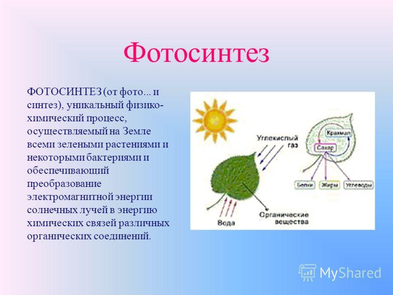 Источники углеводов на Земле (фотосинтез) Жизнь на нашей планете без фотохимических реакций была бы невозможна. В процессе фотосинтеза в листьях растений при поглощении солнечной энергии происходит превращение воды и оксида углерода (IV) в углеводы и