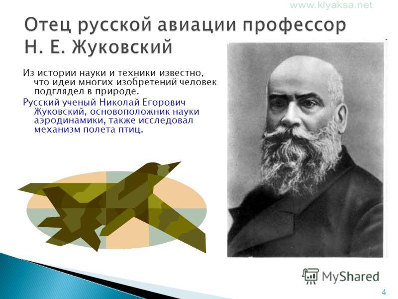 4 Из истории науки и техники известно, что идеи многих изобретений человек подглядел в природе. Русский ученый Николай Егорович Жуковский, основоположник науки аэродинамики, также исследовал механизм полета птиц.