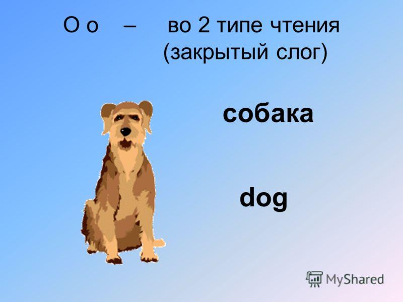 O o – во 2 типе чтения (закрытый слог) собака dog
