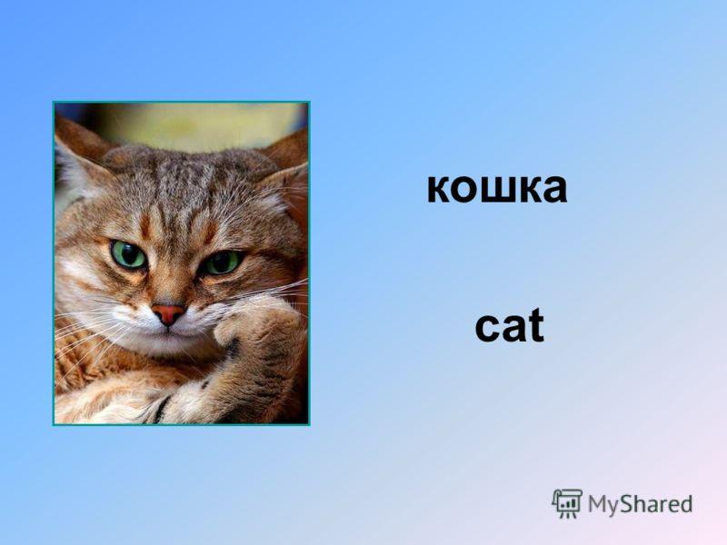 кошка cat