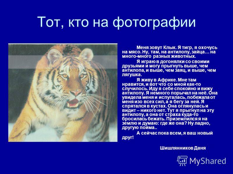 Тот, кто на фотографии Меня зовут Клык. Я тигр, я охочусь на мясо. Ну, там, на антилопу, зайца… на много-много разных животных. Я играю в догонялки со своими друзьями и могу прыгнуть выше, чем антилопа, и выше, чем заяц, и выше, чем лягушка. Я живу в