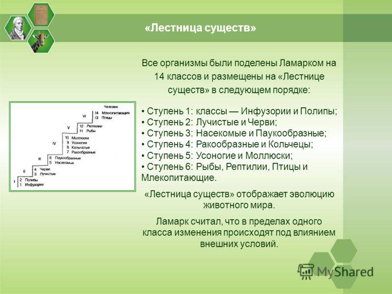 «Лестница существ» Все организмы были поделены Ламарком на 14 классов и размещены на «Лестнице существ» в следующем порядке: Ступень 1: классы Инфузории и Полипы; Ступень 2: Лучистые и Черви; Ступень 3: Насекомые и Паукообразные; Ступень 4: Ракообраз