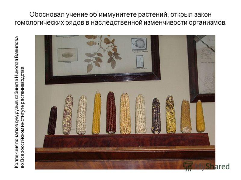 Обосновал учение об иммунитете растений, открыл закон гомологических рядов в наследственной изменчивости организмов. Коллекция початков кукурузы в кабинете Николая Вавилова во Всероссийском институте растениеводства.