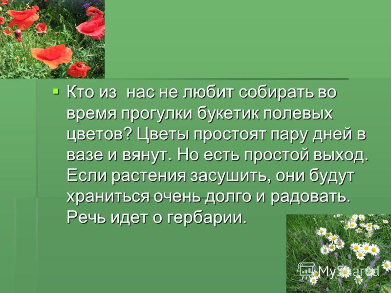 Кто из нас не любит собирать во время прогулки букетик полевых цветов? Цветы простоят пару дней в вазе и вянут. Но есть простой выход. Если растения засушить, они будут храниться очень долго и радовать. Речь идет о гербарии. Кто из нас не любит собир