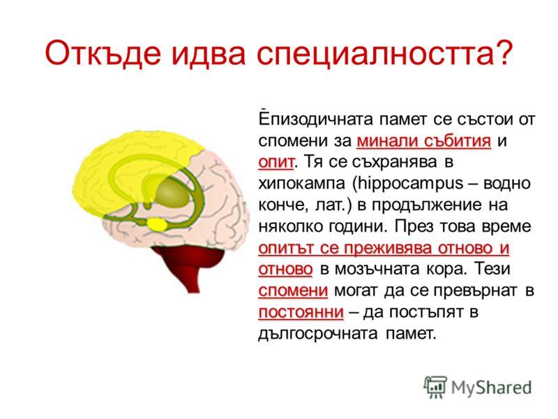 Откъде идва специалността? минали събития опит опитът се преживява отново и отново спомени постоянни Епизодичната памет се състои от спомени за минали събития и опит. Тя се съхранява в хипокампа (hippocampus – водно конче, лат.) в продължение на няко