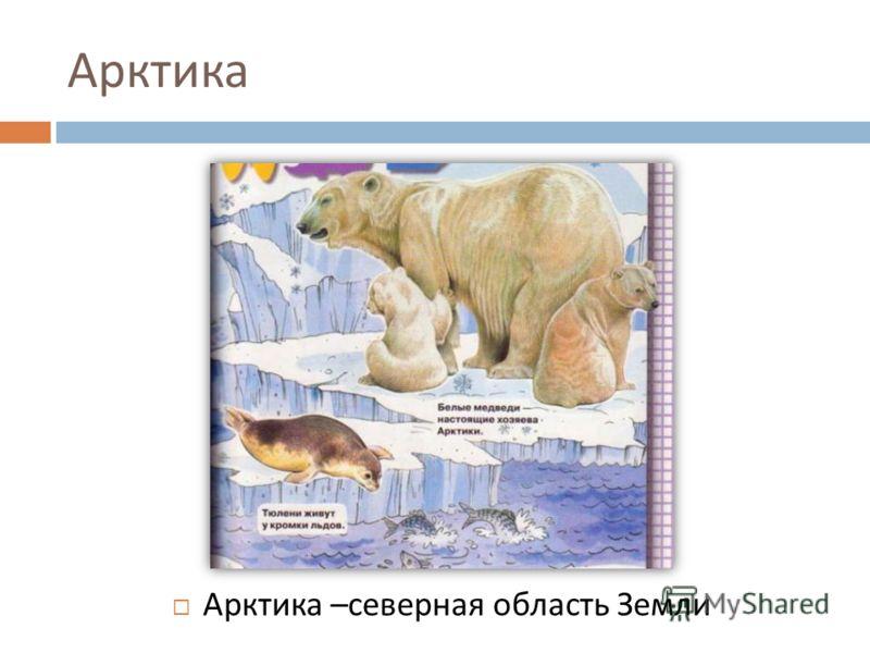 Арктика Арктика – северная область Земли
