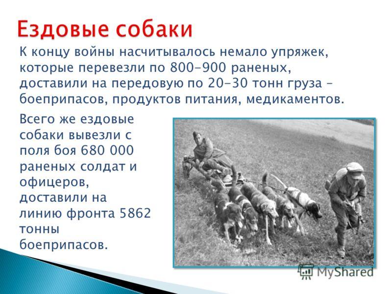 К концу войны насчитывалось немало упряжек, которые перевезли по 800-900 раненых, доставили на передовую по 20-30 тонн груза – боеприпасов, продуктов питания, медикаментов. Всего же ездовые собаки вывезли с поля боя 680 000 раненых солдат и офицеров,