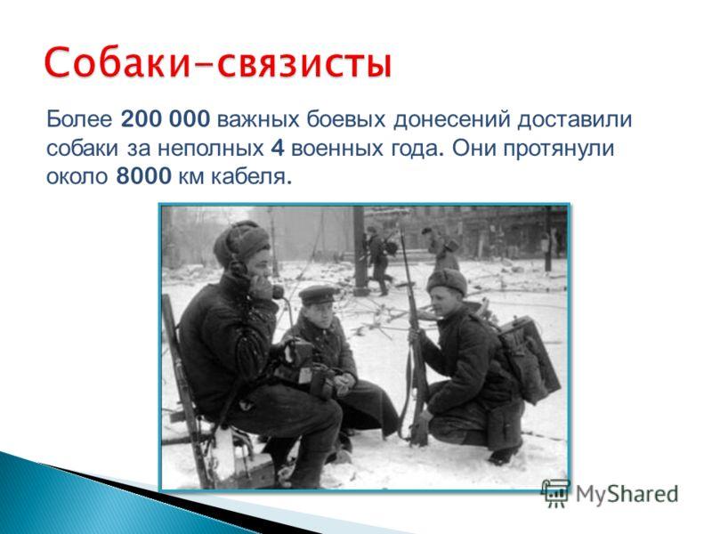 Более 200 000 важных боевых донесений доставили собаки за неполных 4 военных года. Они протянули около 8000 км кабеля.
